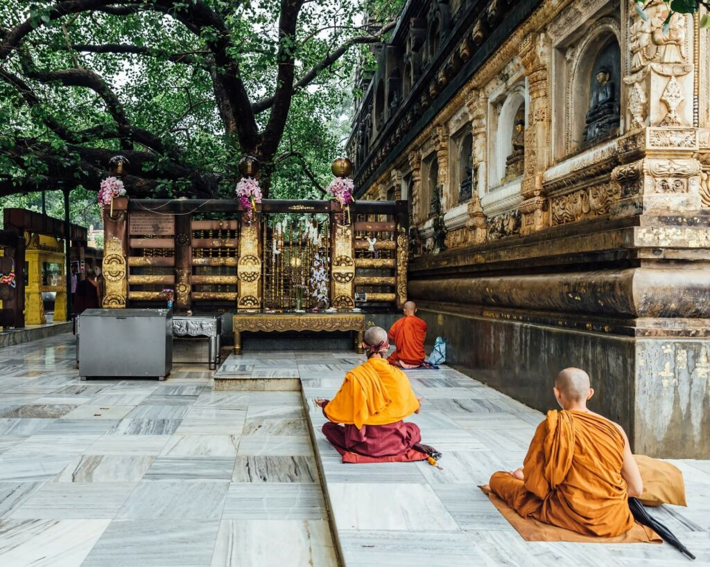 Bodhi Tree India